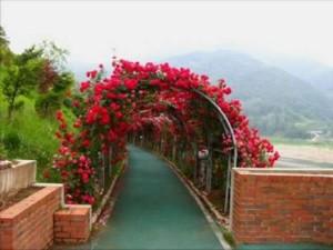Corredores de Flores