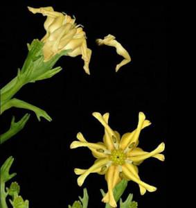 Flores com pétalas humanas