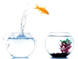 Peixe saltando